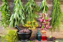 1800 میلیارد ریال برای توسعه گیاهان دارویی اختصاص یافت