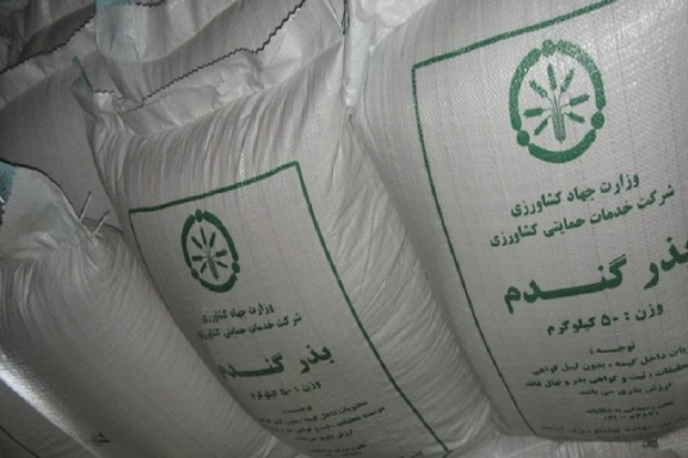 561 تن بذر گندم اصلاح شده در اشنویه توزیع شد
