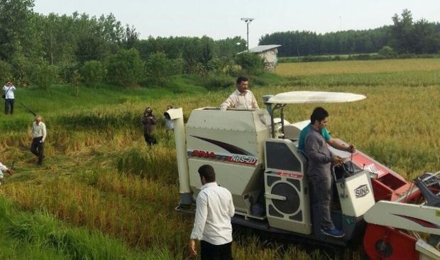 معاون وزیر کشاورزی: 115 هزار هکتار از اراضی شالیزاری کشور کاسته می شود