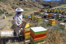 افزایش ۳۱ درصدی تولید عسل در خراسان شمالی