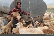 جامعه عشایری خراسان جنوبی چشم انتظار بیش از ۱۸ میلیارد تومان برای تامین آب شرب