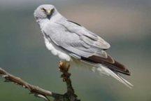 تحویل پرنده زخمی به اداره حفاظت محیط زیست در آستارا