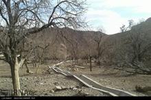 خشکسالی ۸۰ درصدی باغات استان چهارمحال وبختیاری