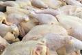 قیمت مرغ  کاهش می یابد