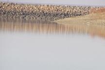 ممنوعیت شکار در تالاب آبشینه تمدید شد
