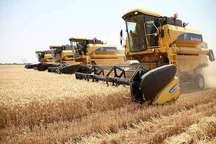 14 هزار تن گندم امسال از مزارع کشاورزی زابل برداشت می شود