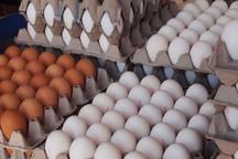بیش از 35 هزار تن تخم مرغ در استان قزوین تولید شد