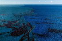 جبرات خسارت زیست محیطی جزیره خارگ الزامیاست