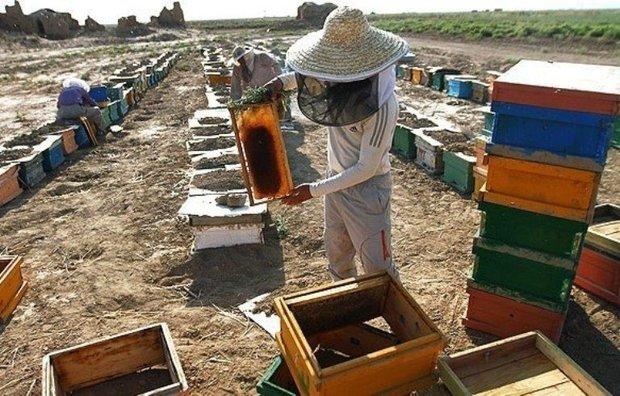 آمارگیری از 320 هزار کلنی عسل در اردبیل