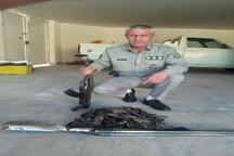 یک شکارچی متخلف در شهرستان ساوه دستگیر شد