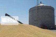 ۹۲ درصد وجه گندم کشاورزان خراسان شمالی پرداخت شد