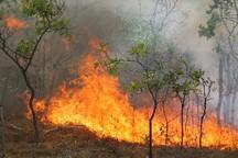 19 هکتار از جنگلها و مراتع کوه عنا در باشت طعمه حریق شد