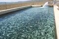 پیش بینی تولید 140 تن ماهی قزل آلا در استخرهای پرورش ماهی آبیک