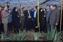 ساخت شهرک گلخانهای در بوئین زهرا کلید خورد