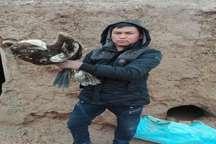 شهروند فریمانی جان یک پرنده شکاری را نجات داد