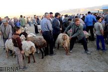 دامداران زنجانی از استان های همجوار دام زنده نخرند