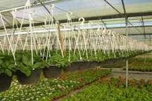 نارضایتی استاندار لرستان از نحوه واگذاری واحدهای گلخانه خرم آبادبه بخش خصوصی