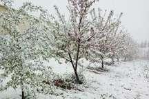 برف فروردین 180 میلیارد تومان باغ های مازندران خسارت زد