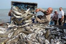 صید کم سابقه 40 تن ماهی در شرق گیلان