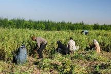 55 میلیارد ریال تسهیلات اشتغال روستایی در خمین پرداخت شد