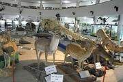 موزه تاریخ و طبیعت در قزوین آغاز به کار کرد