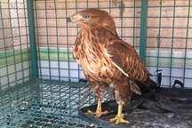شکارچی سارگپه به تحمل سه سال زندان محکوم شد