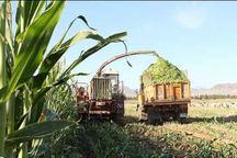 ذرت کاران برای جلوگیری از خسارت محصول خود را جمع آوری کنند