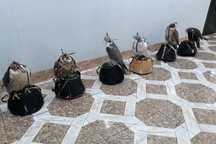 دادستان حمیدیه در خصوص دستگیری شکارچیان توضیحاتی ارائه کرد