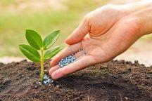 اختصاص بیش از ۷۷ هزار تن کود یارانهای به کشاورزان قزوینی