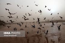 پیشبینی خاک برای خوزستان   شرجی کمتر میشود