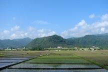 باید و نبایدهای کم آبی و محدودیت برنجکاری در شمال کشور