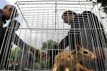 ممنوعیت خرید و فروش گونههای جانوری حیات وحش در ایام نوروز