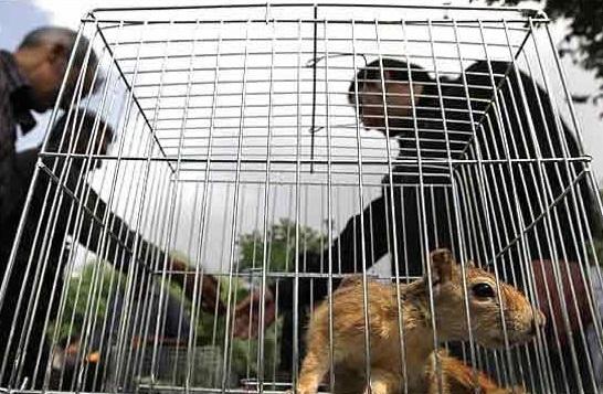 ممنوعیت خرید و فروش گونههای جانوری حیاتوحش در ایام نوروز