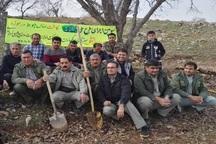 طرح جنگلانه، راهی برای نجات جنگل ها