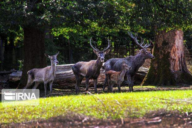 پنج هزار راس حیوان علفخوار در پارک ملی گلستان سرشماری شدند