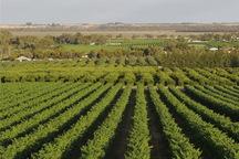 133 هزار هکتار از زمین های کشاورزی استان تهران سند ندارد