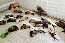کشف بیش از 490 دام طی ماه گذشته در پارک ملی بوجاق  قاچاق پرندگان نادر به کشورهای حاشیه خلیج فارس