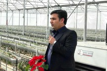 مدیر کشاورزی مراغه: گلخانه های کوچک تسهیلات کم بهره دریافت می کنند