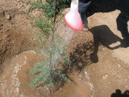 درختکاری دانش آموزان در بردسیر