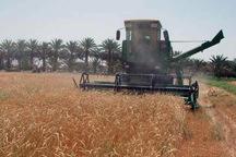 خرید گندم در ایرانشهر از مرز هزار تن گذشت