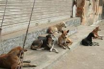 76مورد حیوان گزیدگی در تنگستان رخ داد