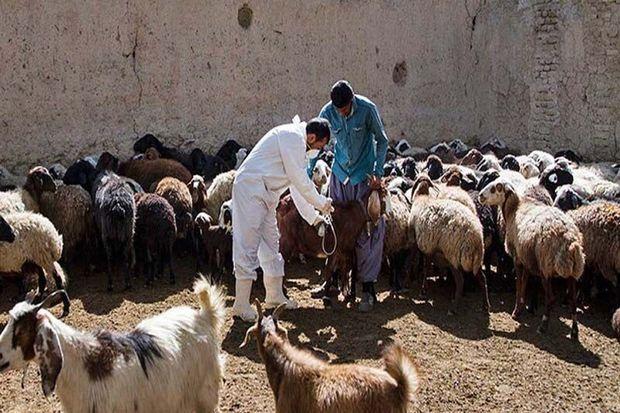 بیش از یک میلیون راس دام در کردستان علیه بیماری تب برفکی واکسینه شد