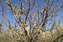 حوادث بیش از 225 میلیارد ریال به کشاورزی گچساران خسارت زد