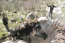 قاچاقچیان ذغال به جنگل بانان ایذه تیراندازی کردند