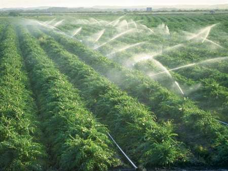 سرمایه گذاری های خارجی بخش کشاورزی در پسابرجام افزایش 300 برابری داشتند