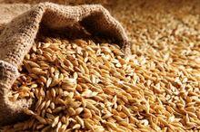 خرید تضمینی گندم در لرستان آغاز شد