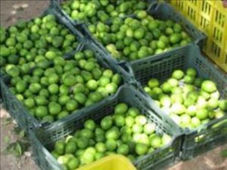 کشف لیموی ترش خارجی و مواد نساجی قاچاق در عسلویه و دشتستان بوشهر