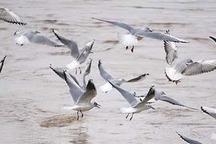 70 درصد  دریاچه تالاب میقان اراک آبگیری شد
