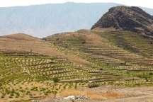 10 هزار هکتار از زمین های شیبدار کهگیلویه و بویراحمد زیر کشت می رود