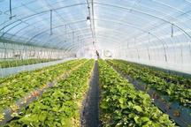 100 هکتار گلخانه جدید در استان تهران احداث می شود